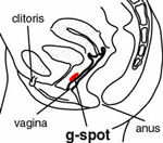 Scientist Finds G-Spot (Can I Say, I Told You So?)